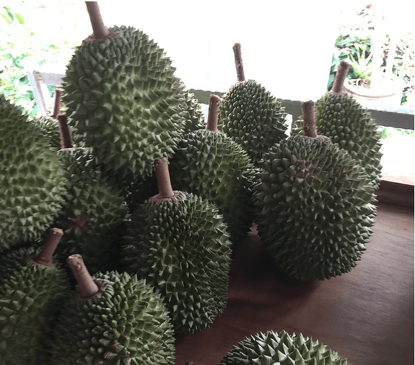 durian-scams